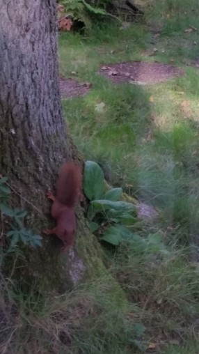 eekhoorn1-small