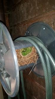 nest-winterkoning-small