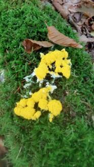 paddenstoel3-small