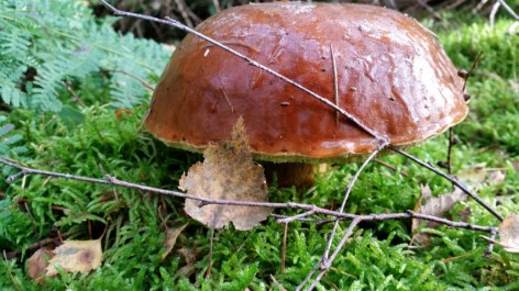 paddenstoel5-small