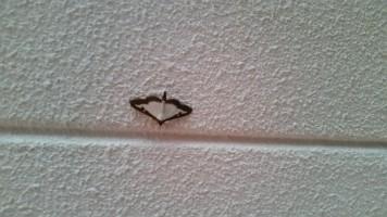 vlinder1-small