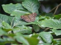 vlinder2-small